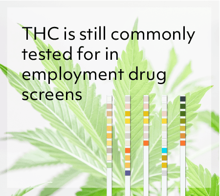 THC is still commonly tested for in employment drug screens